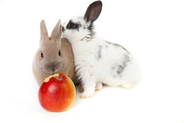 apfel teilen kaninchen