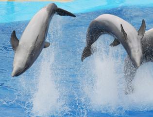 Fond de hotte en verre imprimé Dauphins juming dolphins
