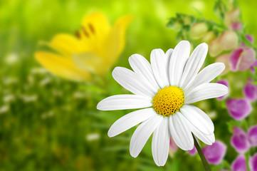 Blumen 186