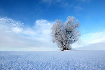 Wall Mural - WInter alone tree