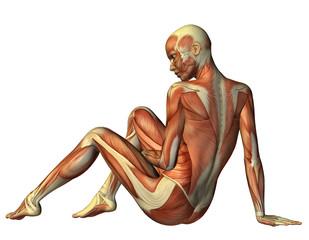 Muskelaufbau sitzende Frau von hinten