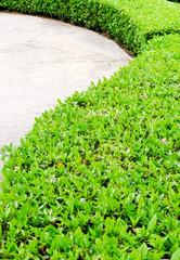 Green shrubbery