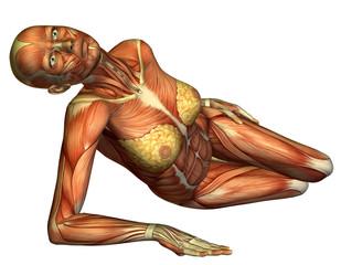 Wall Mural - Muskel liegender weiblicher Körper