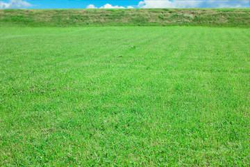 Beauty Grass Landscape