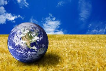 mondo nel campo di grano