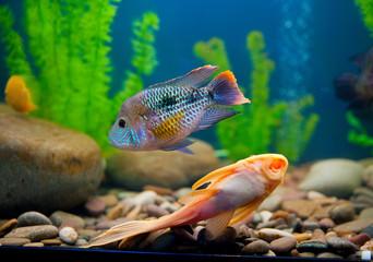 Colorful fish aquarium