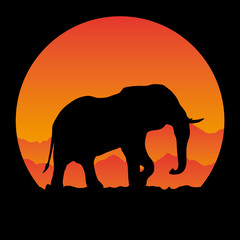 observation elephant