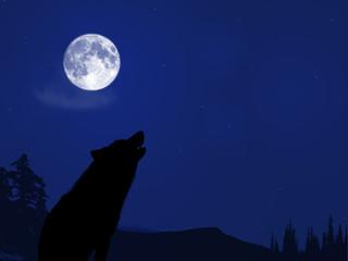 Pleine lune - hurlement de loup la nuit