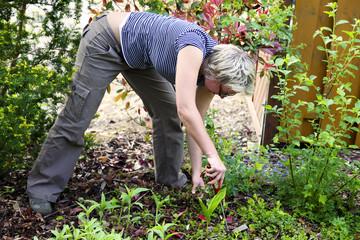 bei der Gartenarbeit (Unkraut zupfen im Gartenbeet)