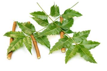 Herbal Neem leaves and twigs