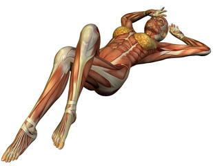 Wall Mural - Muskelaufbau einer auf dem Rücken liegenden Frau