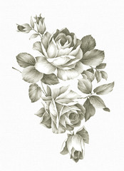 hand drawn Old-styled rose