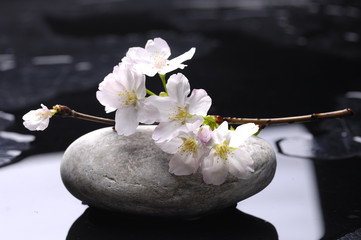 Acrylic Prints Spa stones and pink cherry flower reflection