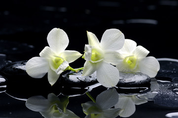 Wall Murals Spa Purple orchid and black stones with reflection