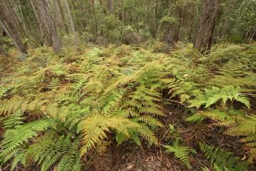 McKenzie River Rainforest Walk, Victoria, Australia