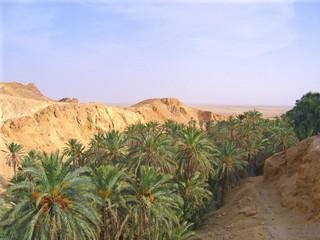 Oaza na Saharze