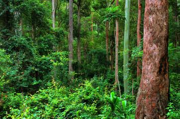 rainforest background, New South Wales, Australia