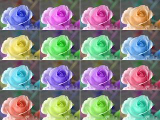 Popart roses