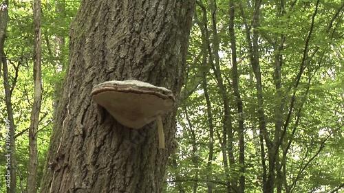 champignon sur un tronc d arbre clip vid o libre de droits sur la banque d 39 images. Black Bedroom Furniture Sets. Home Design Ideas