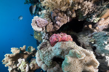 Tropical reef and stone fish in the Red Sea.