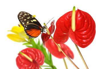 Schmetterling 85