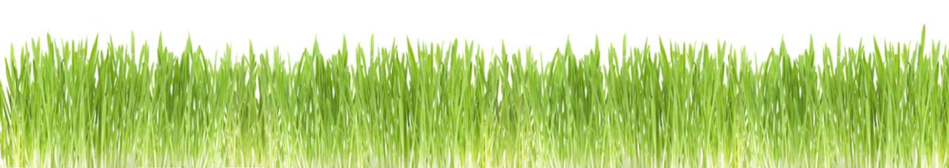 Green grass border, on white background