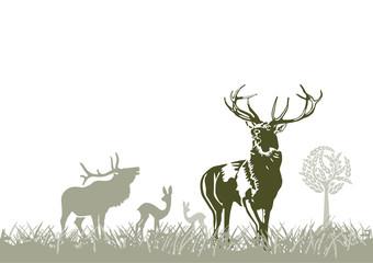 Fototapete - Wild im Wald