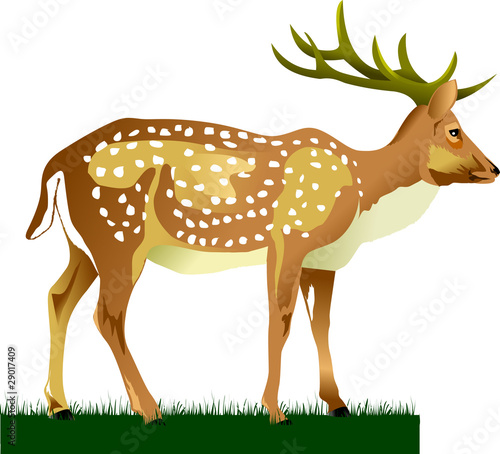 King Deer Stock Image And Royalty Free Vector Files On Fotolia Com