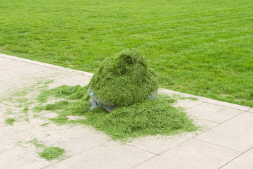 Pile of Green Grass Clippings on a Sidewalk