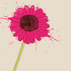 Pink Gerbera Daisy flower, stylish card