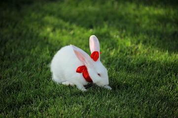 cute white rabbit sitting on grass