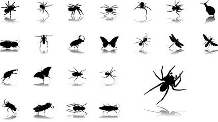 Big set icons - 24. Insects