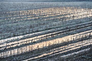 inverno paesaggio 1484