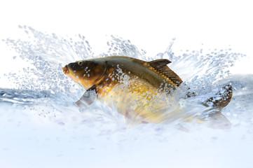 Fische 9