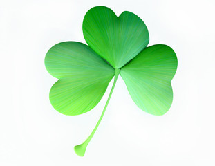 Isolated Clover Leaf in 3D