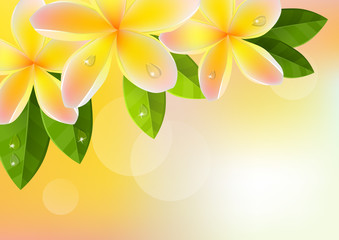Tropic orange background with frangipani and green leaves