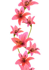 Vertical seamless pattern made of lilies on white background