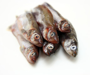 Capelin fish isolated on the white background