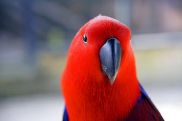 Parrots in rainforest island Penang