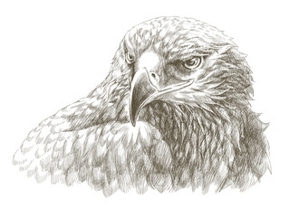 eagle pencil drawing line art