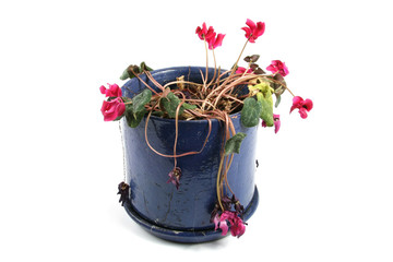 flowerpot of wilted flowers
