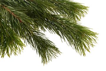Christmas tree detail.
