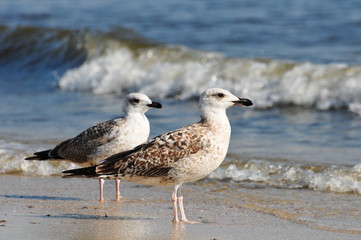 two seagulls at the seaside