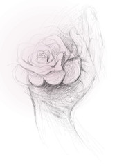 Open hand with Rose / realistic sketch (not auto-traced)