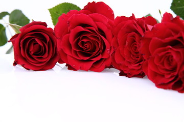 Red roses on white background with space for text