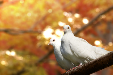 Two doves on the tree
