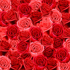 Red and pink roses as a wallpaper background