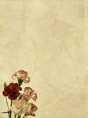 Carnation flowers textured