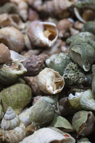 Bulots buccins escargots marins cuisiner photo libre - Cuisiner les escargots ...