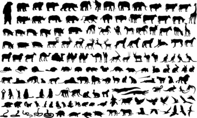 Vector illustration of animals, reptile and birds silhouettes
